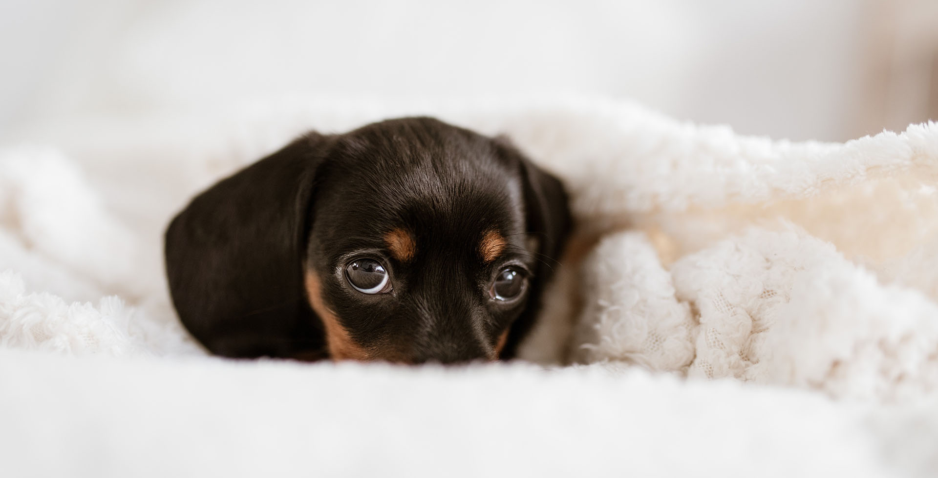 Design accattivante, performance elevate, formule bio: quattro linee per la toelettatura ridefiniscono il concetto di cosmesi canina